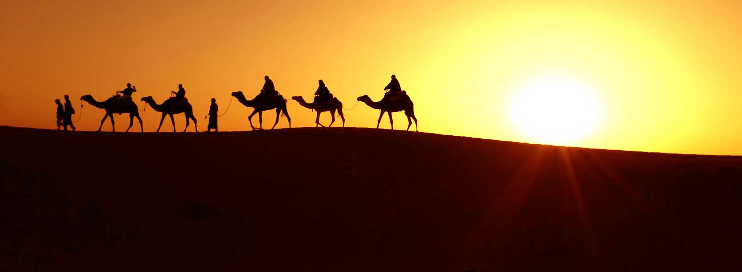 camels walking on sand against late afternoon sun